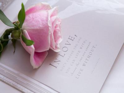 A pink wedding rose