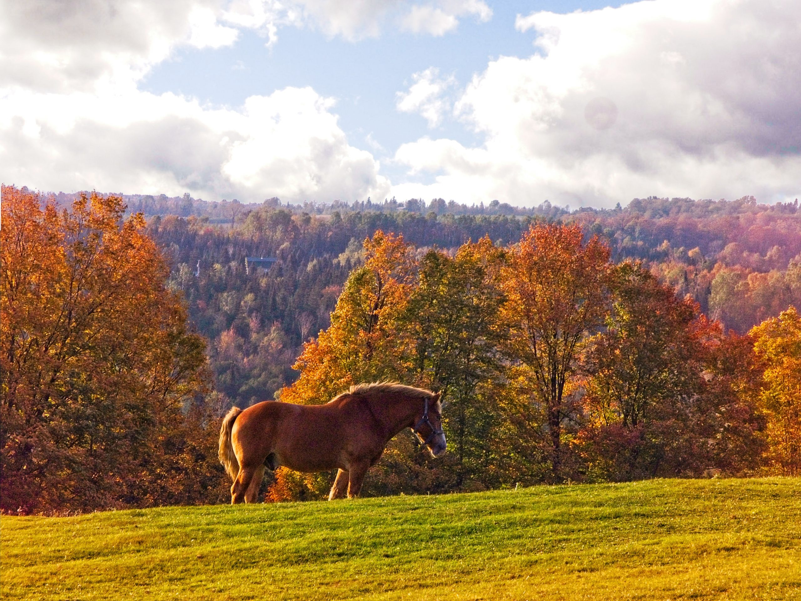 Horse in foliage